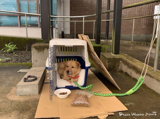災害発生時、あなたは愛犬と一緒に避難できますか?